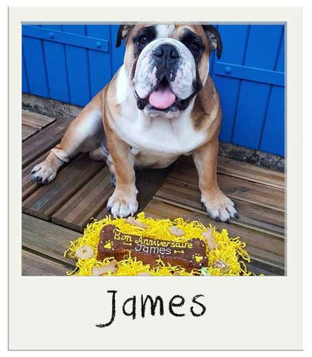 James The English Bulldog