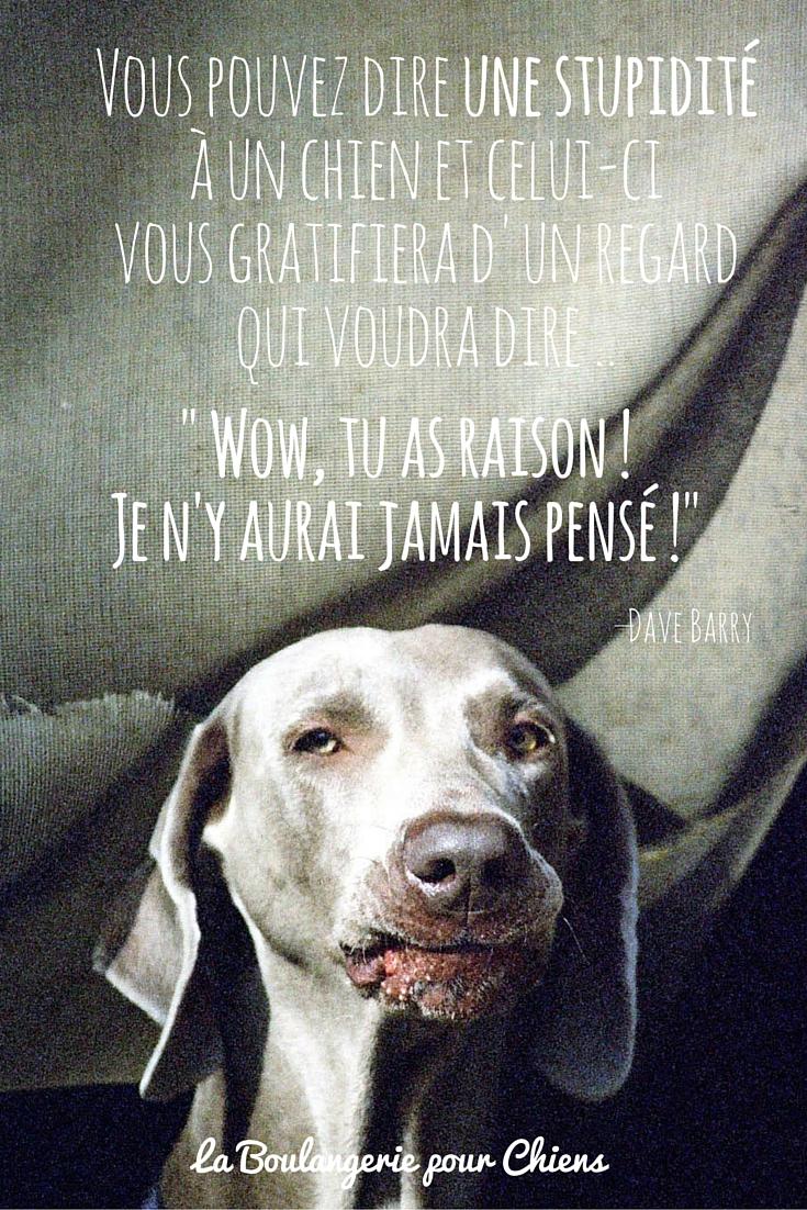 Citations sur les chiens - LaBoulangeriePourChiens.com