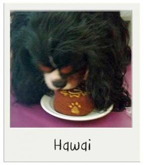 Gâteau d'anniversaire pour chiens BIO