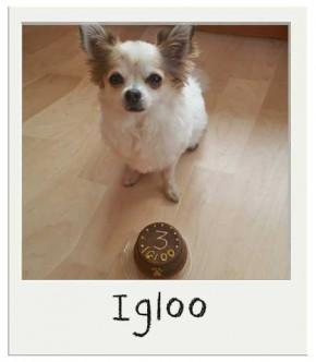 Igloo - Gâteau pour chien BIO
