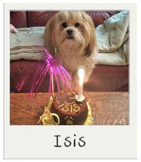 Isis - Gâteau d'anniversaire pour chiens BIO