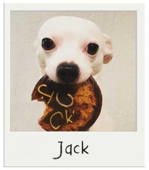 Jack - Gâteau d'anniversaire pour chiens BIO