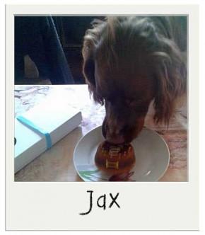 Jax - Gâteau pour chien BIO