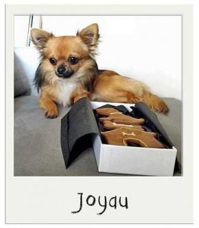 Coffret cadeau pour chien Caroube