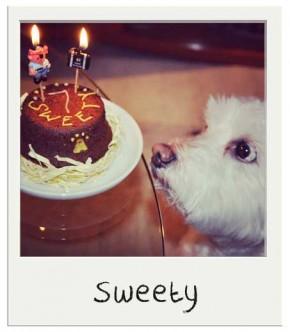 Sweety - Gâteau pour chien BIO