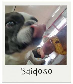 Baidoso - Gâteau d'anniversaire pour chiens BIO