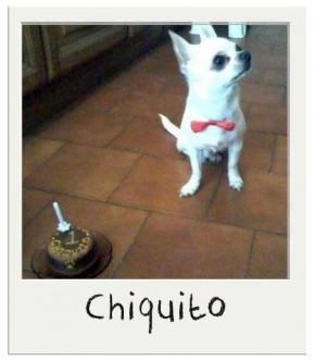 chiquito - Gâteau d'anniversaire pour chiens BIO