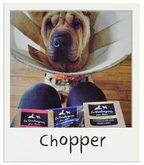 Chopper avec nos biscuits pour chiens