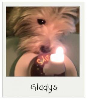 Gladys - Gâteau d'anniversaire pour chiens BIO