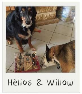Panier de noël pour chiens