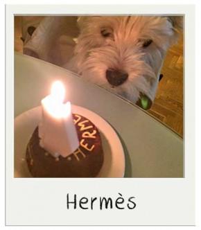 Hèrmes - Gâteau d'anniversaire pour chiens BIO