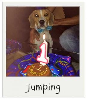 Jumping - Gâteau pour chien BIO