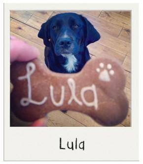 Biscuits avec le nom de chien Caroube