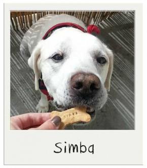 Biscuit personnalisés pour chien au Beurre de Cacahuète
