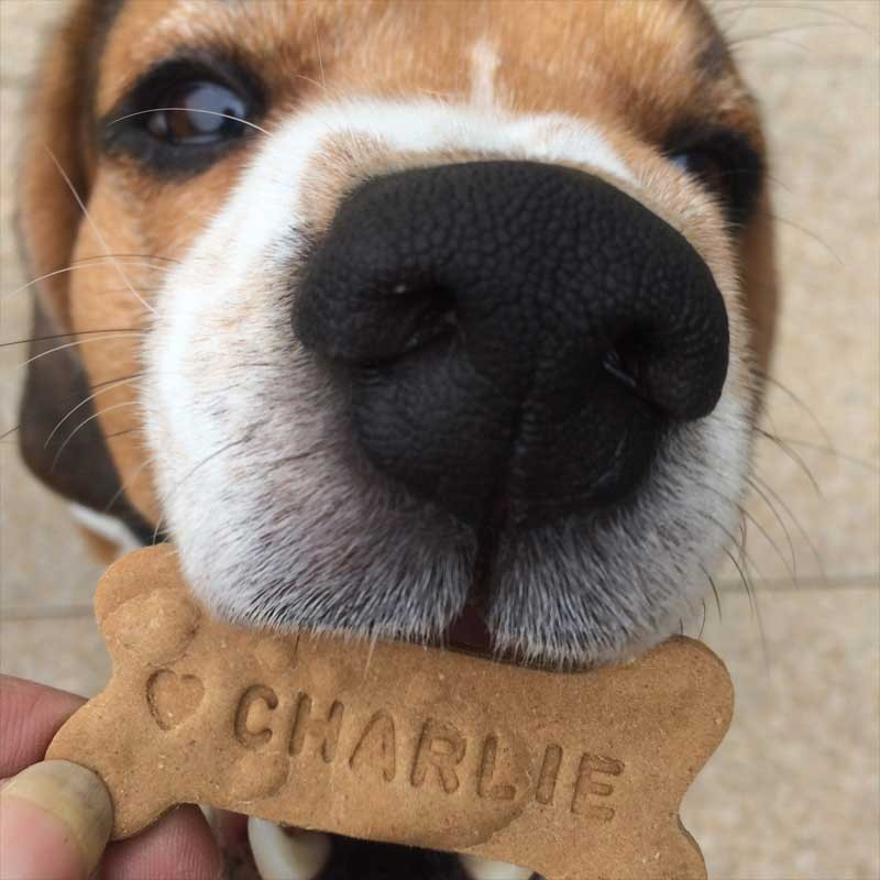ff3cf901c09b Custom Biscuits for Dogs LOVE BONE   Dog Gifts made in France