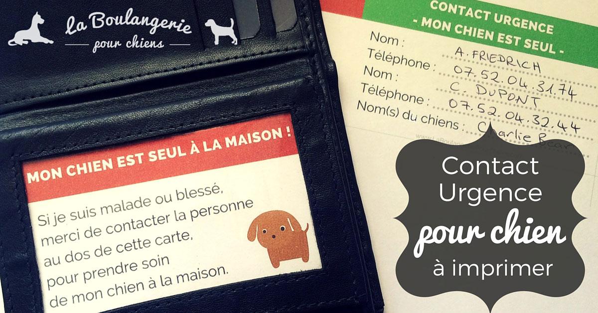 Carte Contact urgence pour chiens