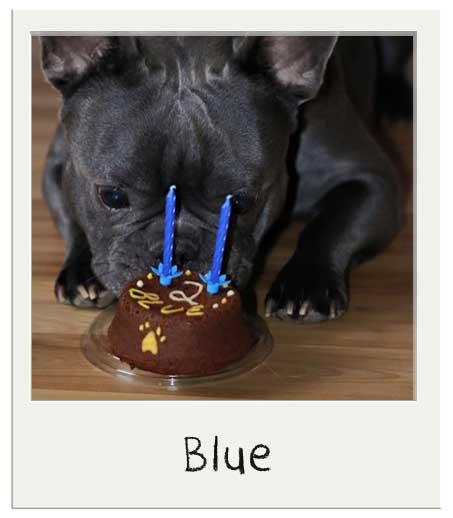 Blue avec notre gâteau pour chiens