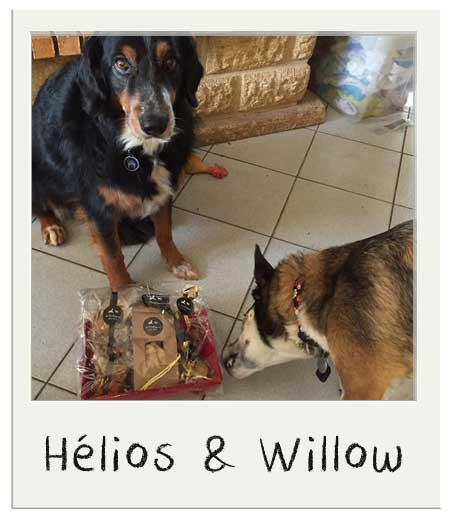 Hélios et Willow