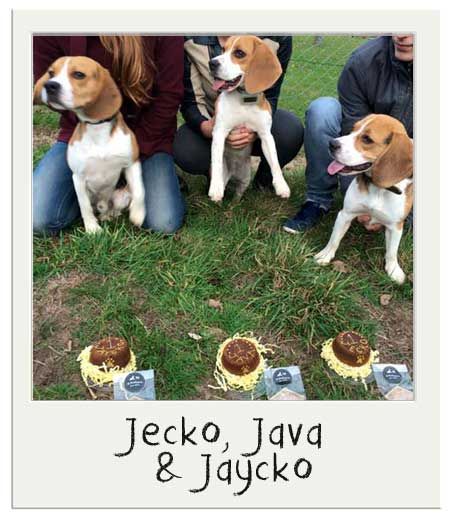 Jecko, Java and Jaycko