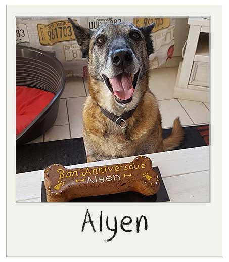 Alyen adores son gâteau pour chiens !