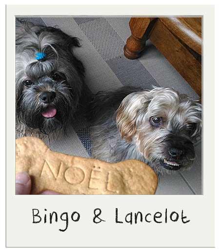 Bingo et Lancelot