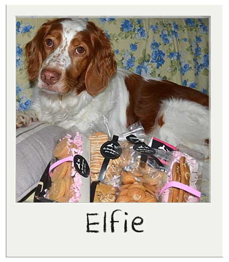 Elfie et notre Panier cadeau chiens