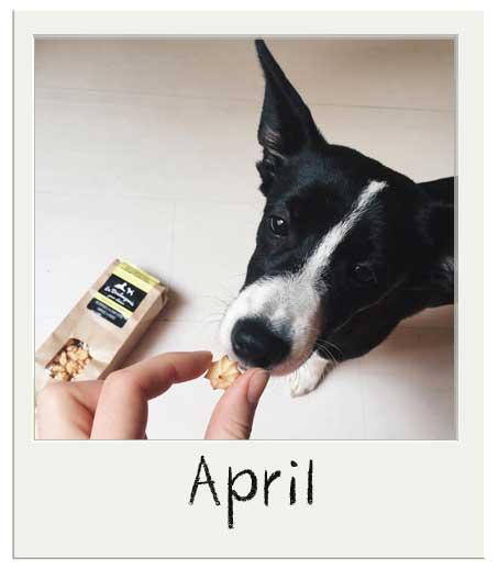 April avec nos friandises bio pour chiens