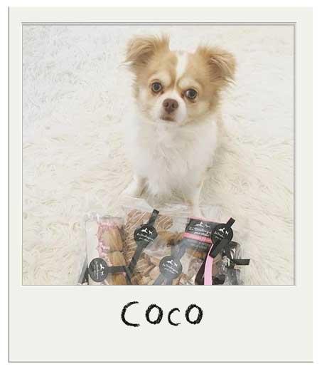 Coco avec son Panier cadeau chiens
