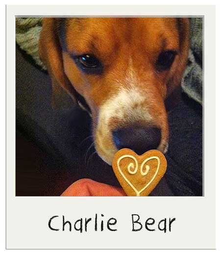 Cadeau St Valentin pour chien