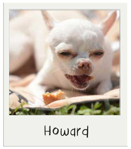 Howard avec nos Cup cakes pour cchien Vanille BIO