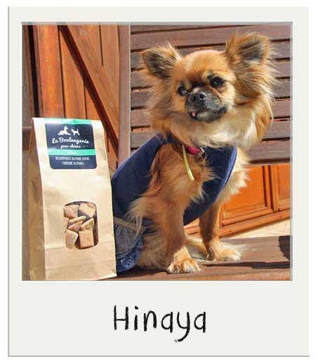 Hinaya avec nos Mini friandises pour chiens Miel