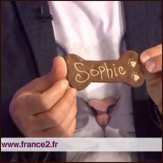 France 2 - C'est au programme