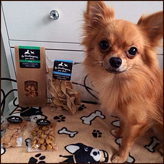 My Toutou blog chihuahua