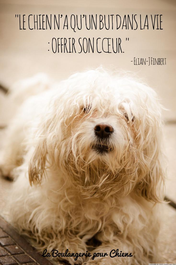 Le chien n'a qu'un but dans la vie : offrir son coeur. Citation chien