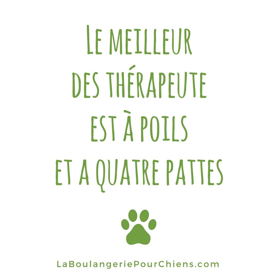 Citation chien la meilleur de thérapeute est à poils et 4 pattes