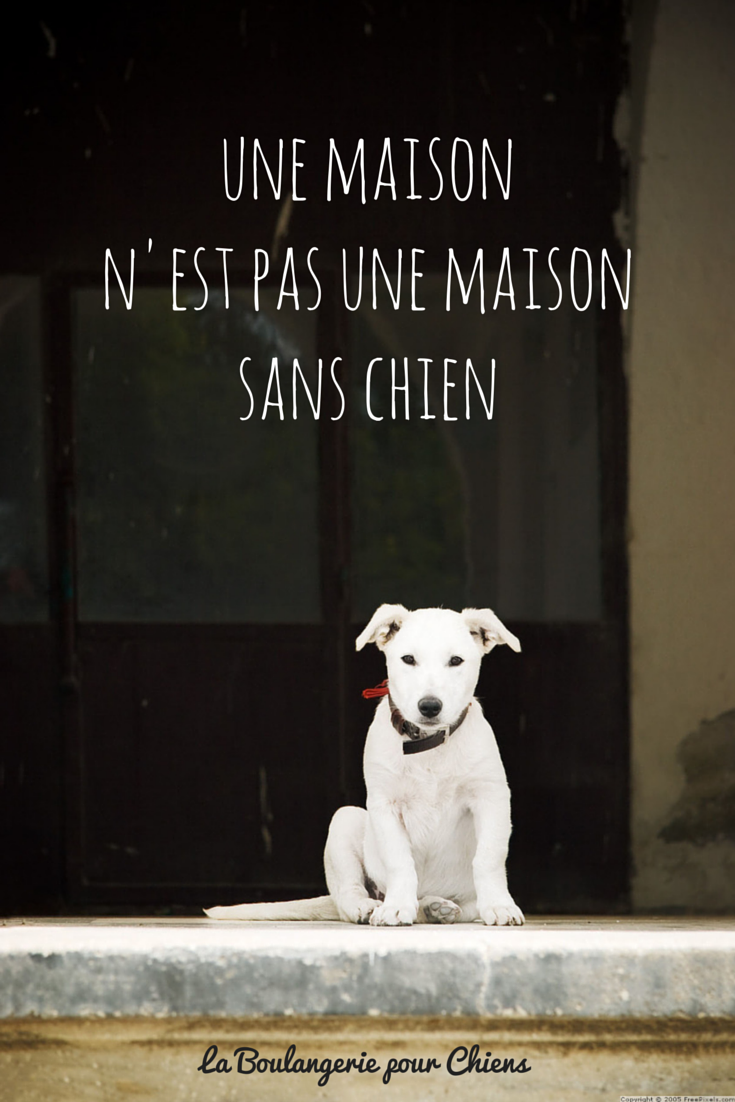 citations sur les chiens. Black Bedroom Furniture Sets. Home Design Ideas