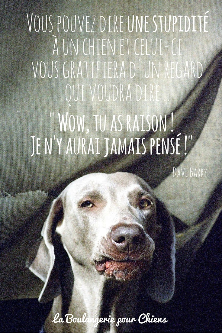 Citations Chiens
