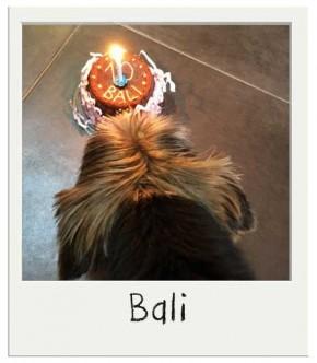 Bali avec son gateau pour chiens