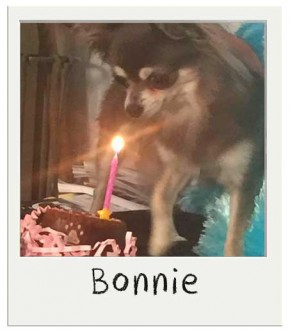 Bonnie avec son gateau pour chiens