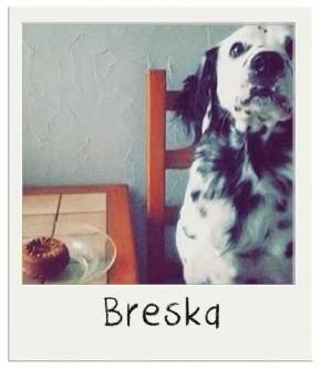 Breska - Gâteau d'anniversaire pour chiens BIO