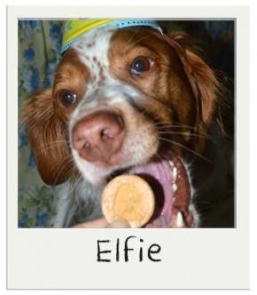 Coffret biscuits gourmands à la vanille pour chiens BIO
