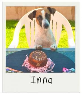 Inna - Gâteau pour chien BIO