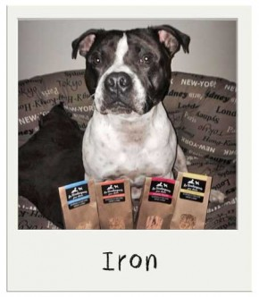 Biscuits pour chiens BIO