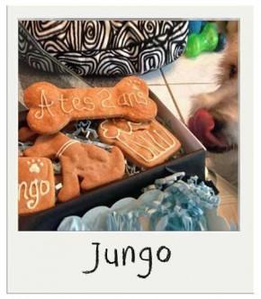 Jungo - Coffret gourmand Anniversaire pour chiens