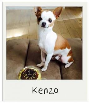 Kenzo - Gâteau d'anniversaire pour chiens BIO