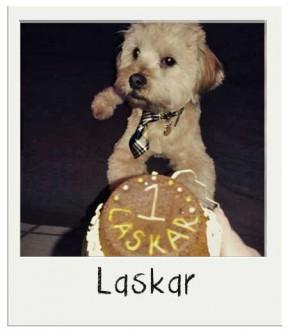 Laskar - Gâteau pour chien BIO