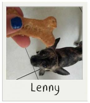 Lenny - Biscuits personnalisés pour chiens Crumble aux Pommes BIO