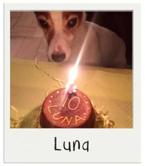 Luna - Gâteau d'anniversaire pour chiens BIO