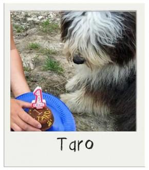 Taro - Gâteau pour chien BIO