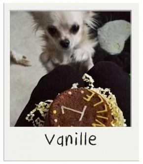Vanille - Gâteau pour chien BIO
